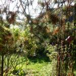 jardin-en-octobre