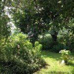 magnifique-jardin-des-quatre-saisons