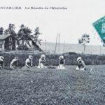 ABSINTHE 01 RECOLTE AVANT 1914
