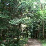 Forêt de la Fresse 1